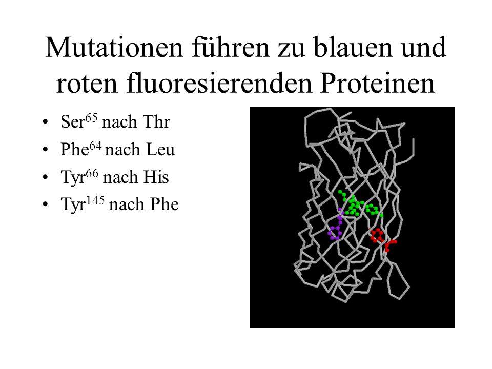 Mutationen führen zu blauen und roten fluoresierenden Proteinen