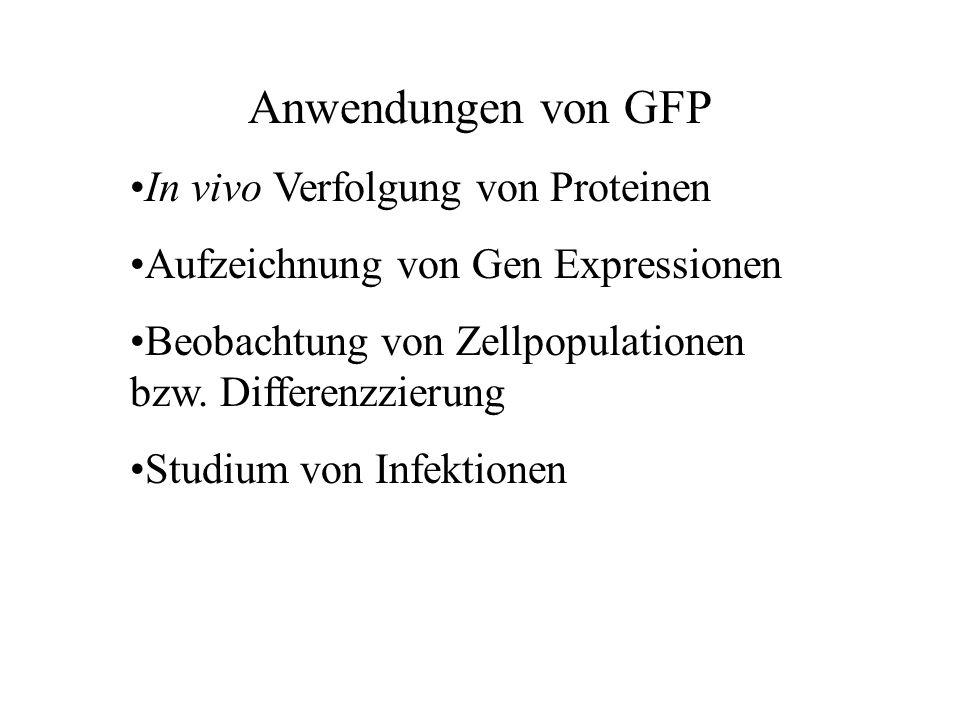 Anwendungen von GFP In vivo Verfolgung von Proteinen