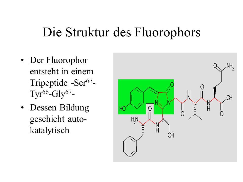 Die Struktur des Fluorophors