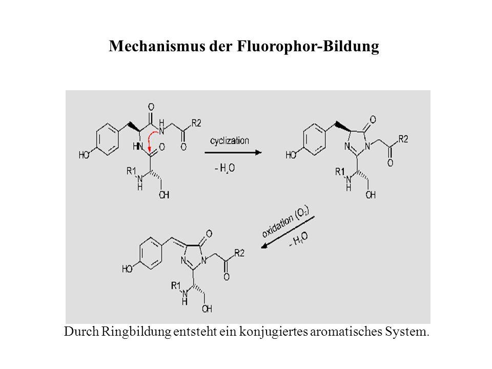 Mechanismus der Fluorophor-Bildung