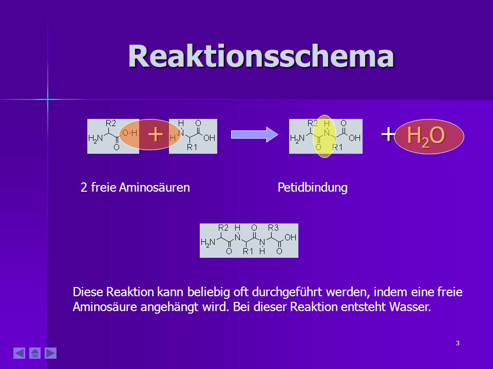 Reaktionsschema + + H2O 2 freie Aminosäuren Petidbindung