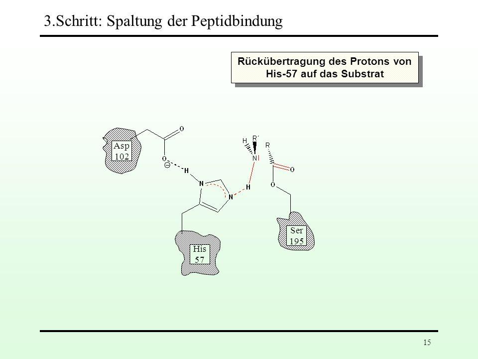 Rückübertragung des Protons von His-57 auf das Substrat