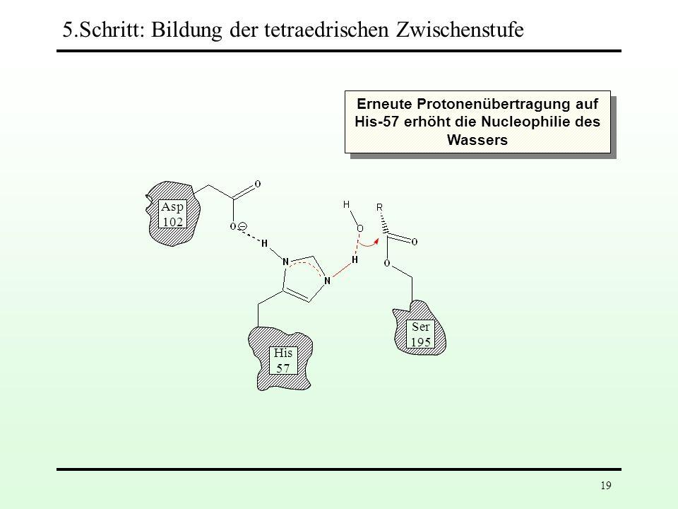 5.Schritt: Bildung der tetraedrischen Zwischenstufe