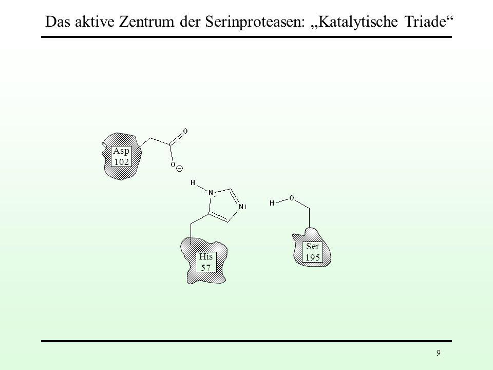 """Das aktive Zentrum der Serinproteasen: """"Katalytische Triade"""