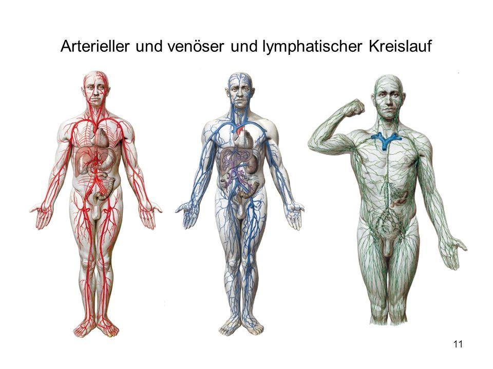 Arterieller und venöser und lymphatischer Kreislauf