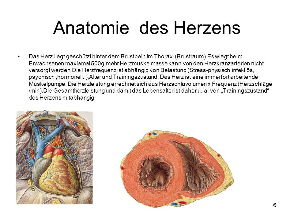 Tolle Anatomie Lunge Und Herz Ideen - Anatomie Ideen - finotti.info
