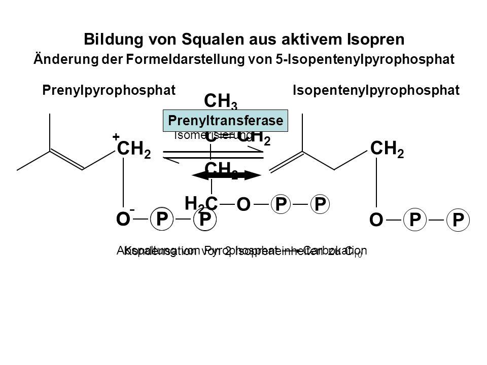 Bildung von Squalen aus aktivem Isopren