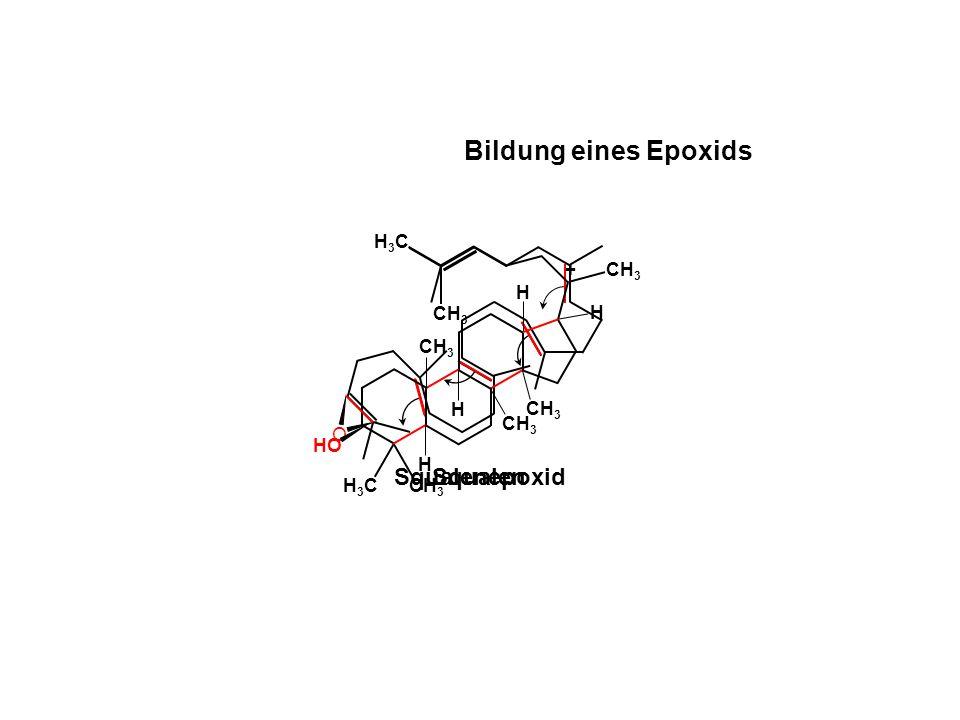 Bildung eines Epoxids NADPH +H+ O2 H+ NADP+ H2O Squalenepoxid Squalen