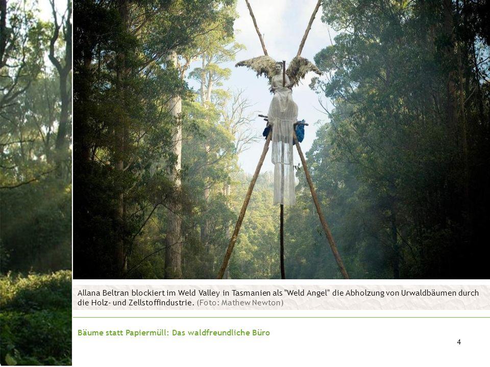 Allana Beltran blockiert im Weld Valley in Tasmanien als Weld Angel die Abholzung von Urwaldbäumen durch die Holz- und Zellstoffindustrie. (Foto: Mathew Newton)