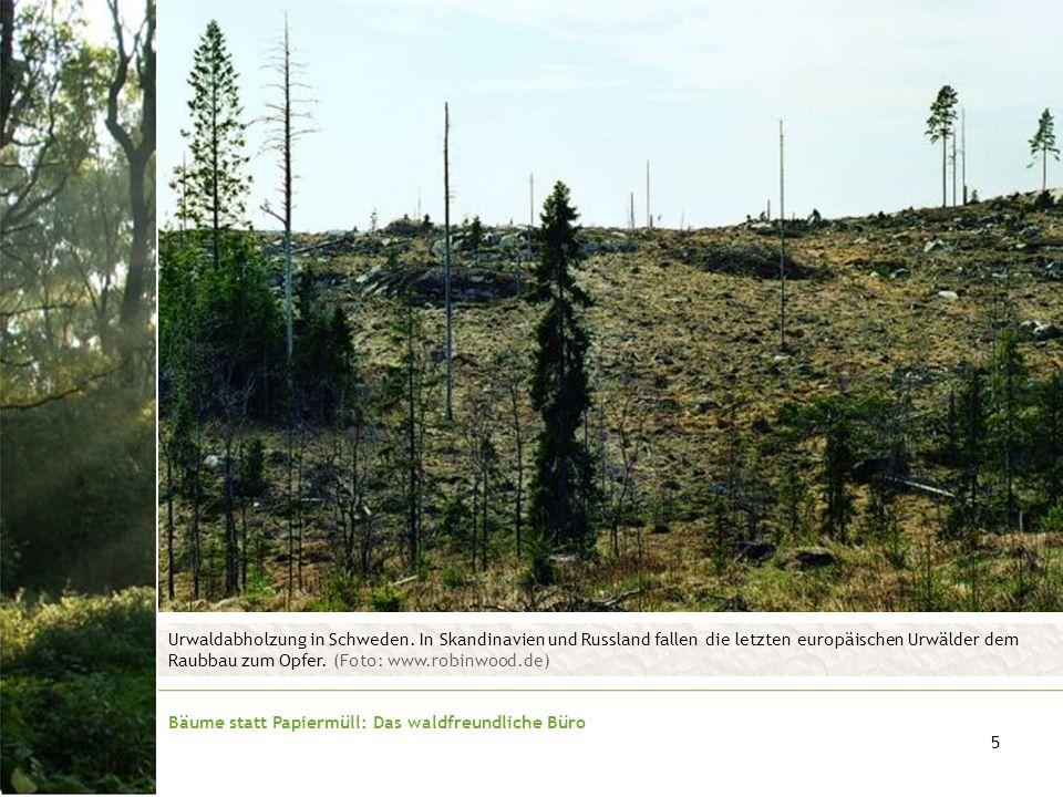 Urwaldabholzung in Schweden