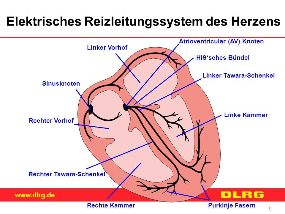 Elektrisches Reizleitungssystem des Herzens
