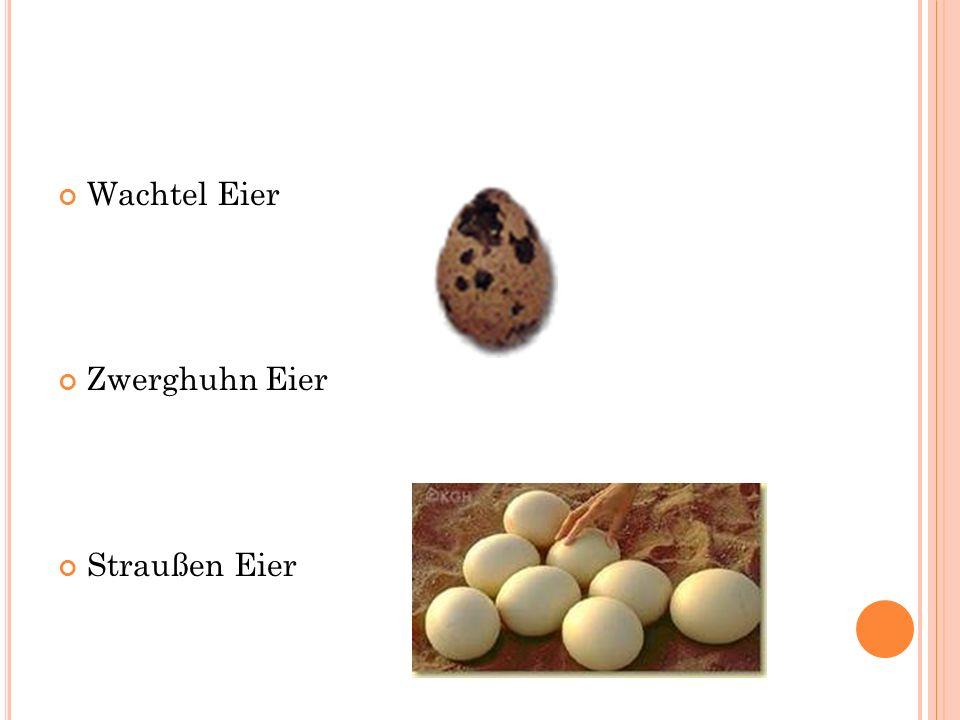 Wachtel Eier Zwerghuhn Eier Straußen Eier