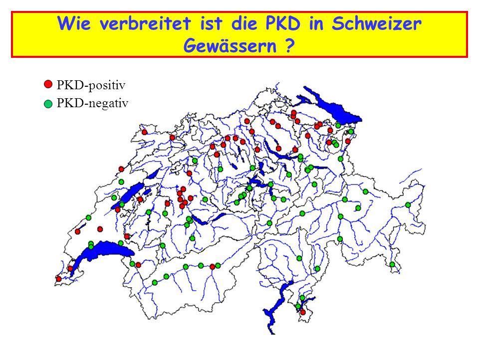 Wie verbreitet ist die PKD in Schweizer Gewässern