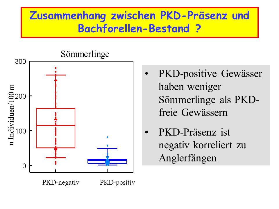 Zusammenhang zwischen PKD-Präsenz und Bachforellen-Bestand