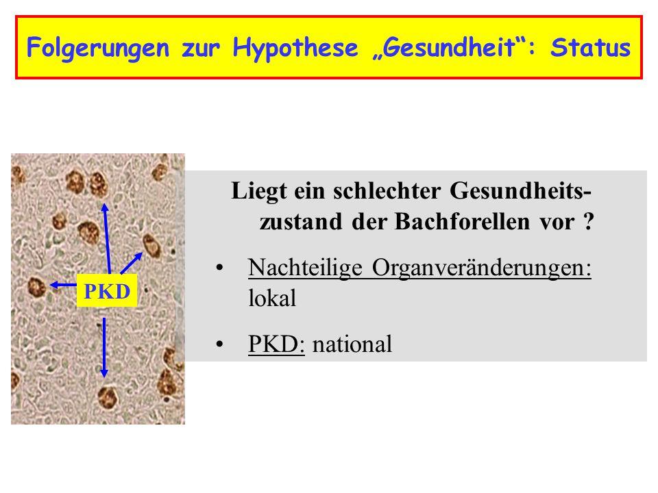 """Folgerungen zur Hypothese """"Gesundheit : Status"""
