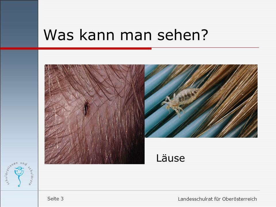 Was kann man sehen Läuse Landesschulrat für Oberösterreich