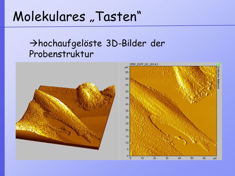 """Molekulares """"Tasten hochaufgelöste 3D-Bilder der Probenstruktur"""