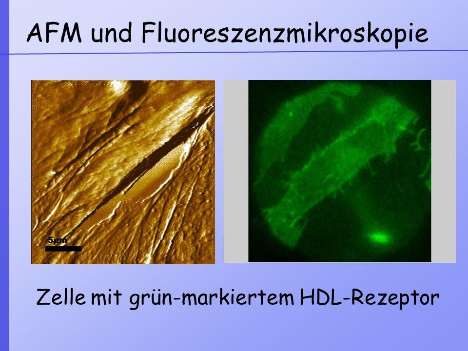 AFM und Fluoreszenzmikroskopie