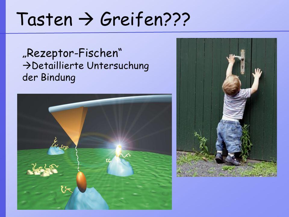 """Tasten  Greifen """"Rezeptor-Fischen Detaillierte Untersuchung"""