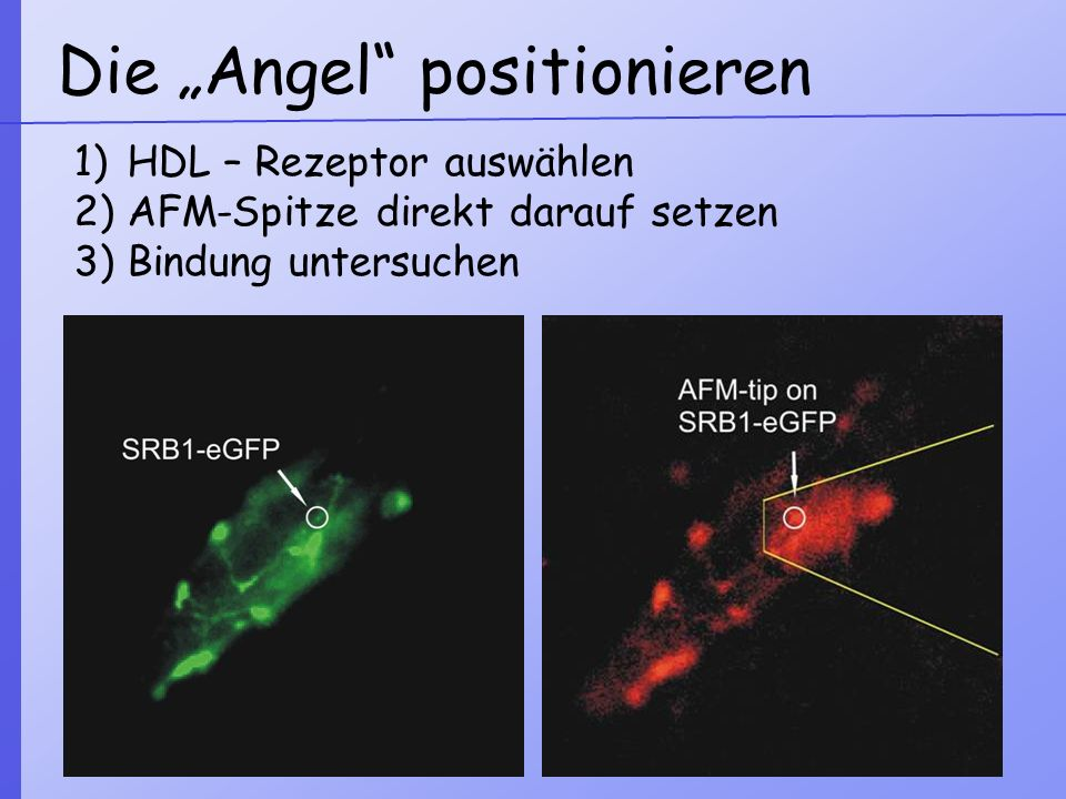 "Die ""Angel positionieren"