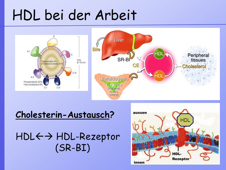 HDL bei der Arbeit HDL HDL-Rezeptor (SR-BI) Cholesterin-Austausch