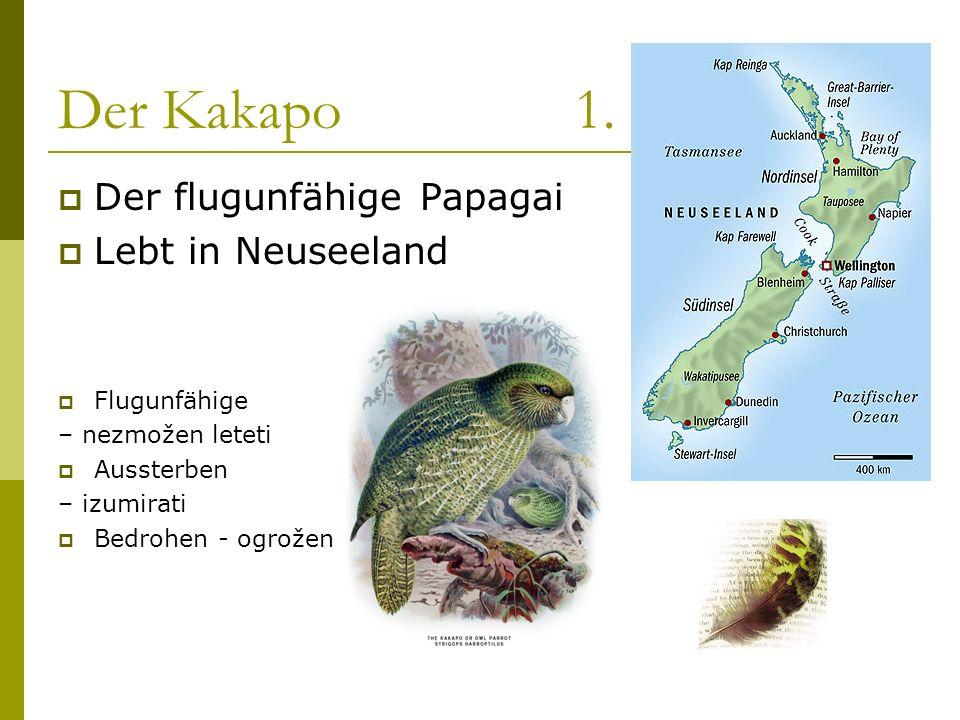 Der Kakapo 1. Der flugunfähige Papagai Lebt in Neuseeland Flugunfähige
