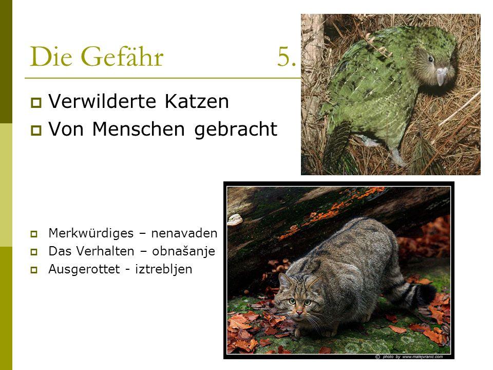 Die Gefähr 5. Verwilderte Katzen Von Menschen gebracht