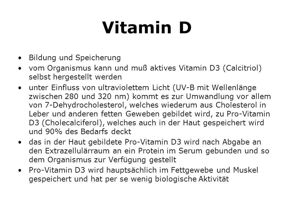 Vitamin D Bildung und Speicherung