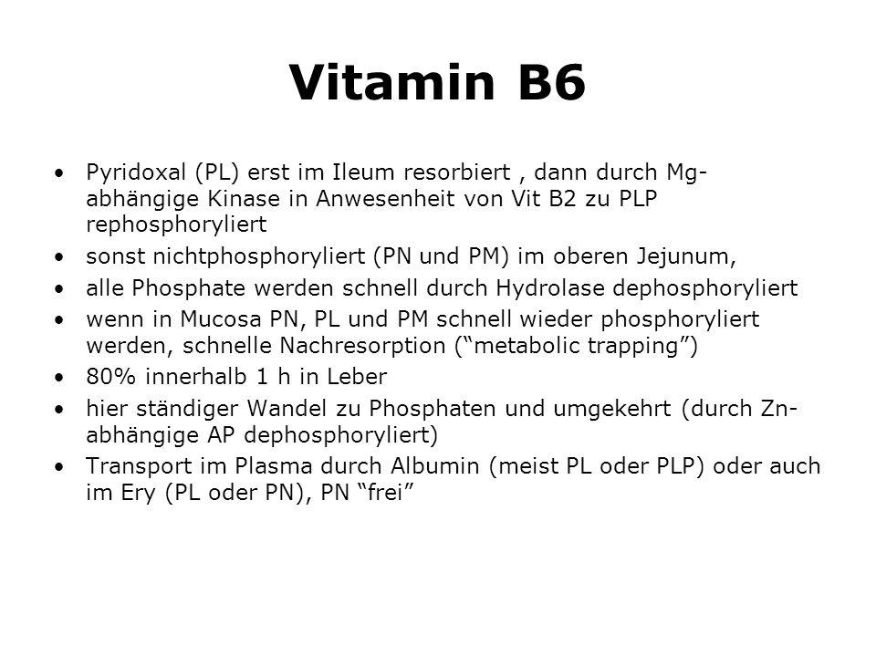Vitamin B6 Pyridoxal (PL) erst im Ileum resorbiert , dann durch Mg- abhängige Kinase in Anwesenheit von Vit B2 zu PLP rephosphoryliert.
