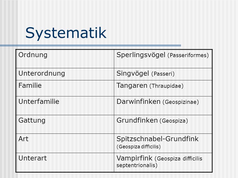Systematik Ordnung Sperlingsvögel (Passeriformes) Unterordnung