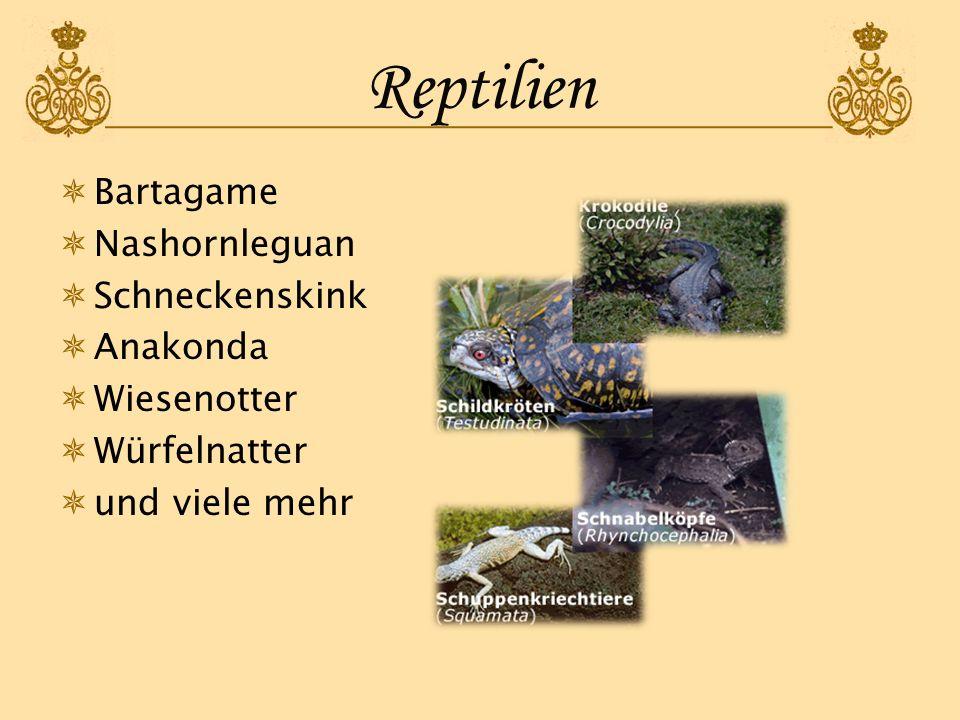 Reptilien Bartagame Nashornleguan Schneckenskink Anakonda Wiesenotter