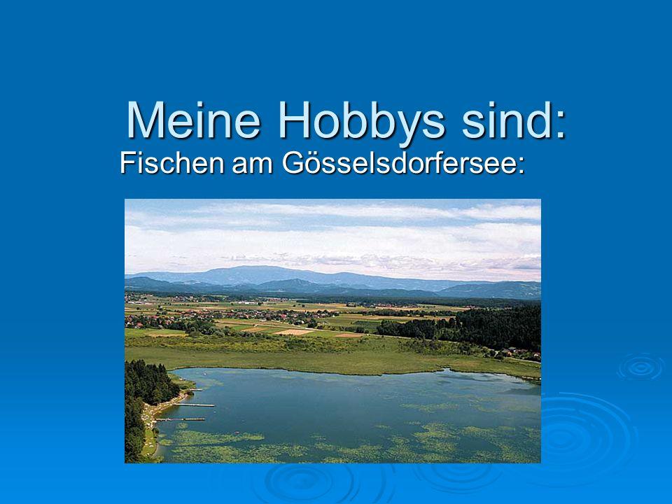 Fischen am Gösselsdorfersee: