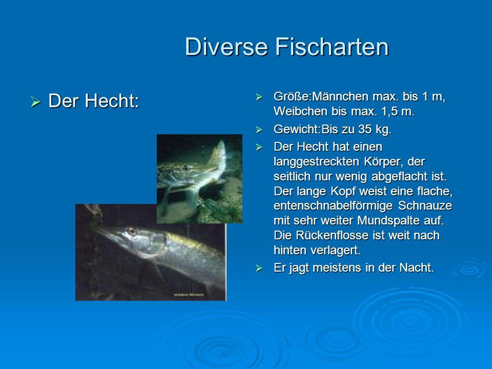 Diverse Fischarten Der Hecht: