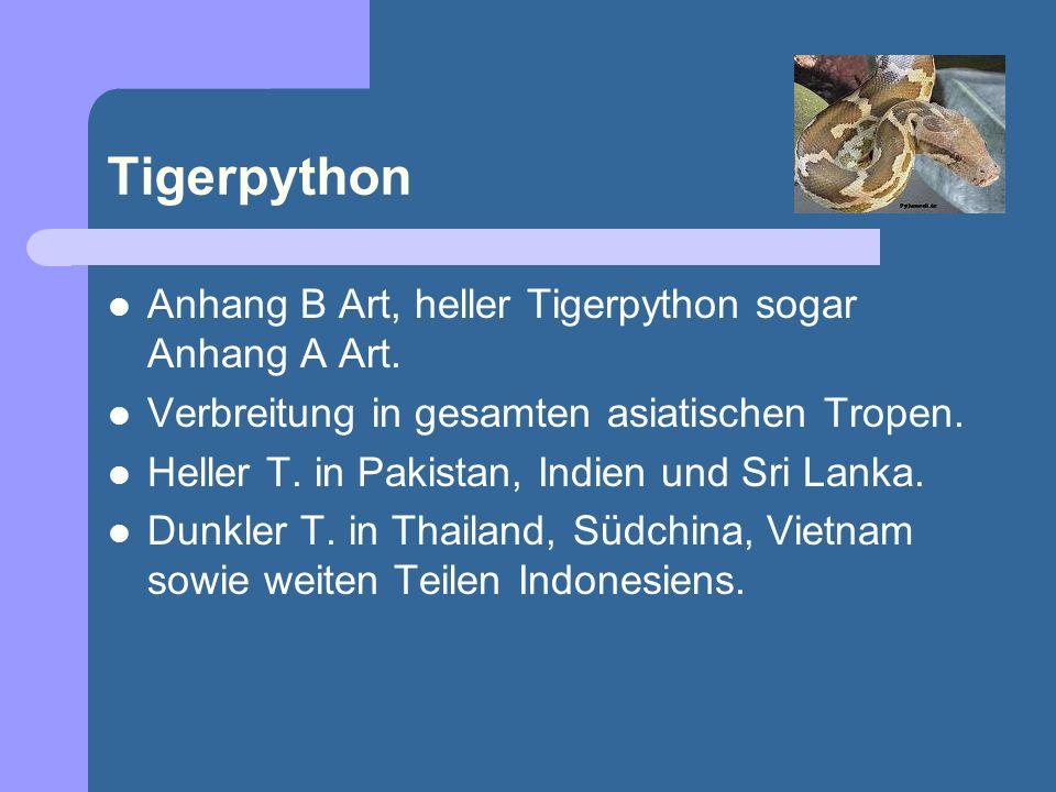 Tigerpython Anhang B Art, heller Tigerpython sogar Anhang A Art.