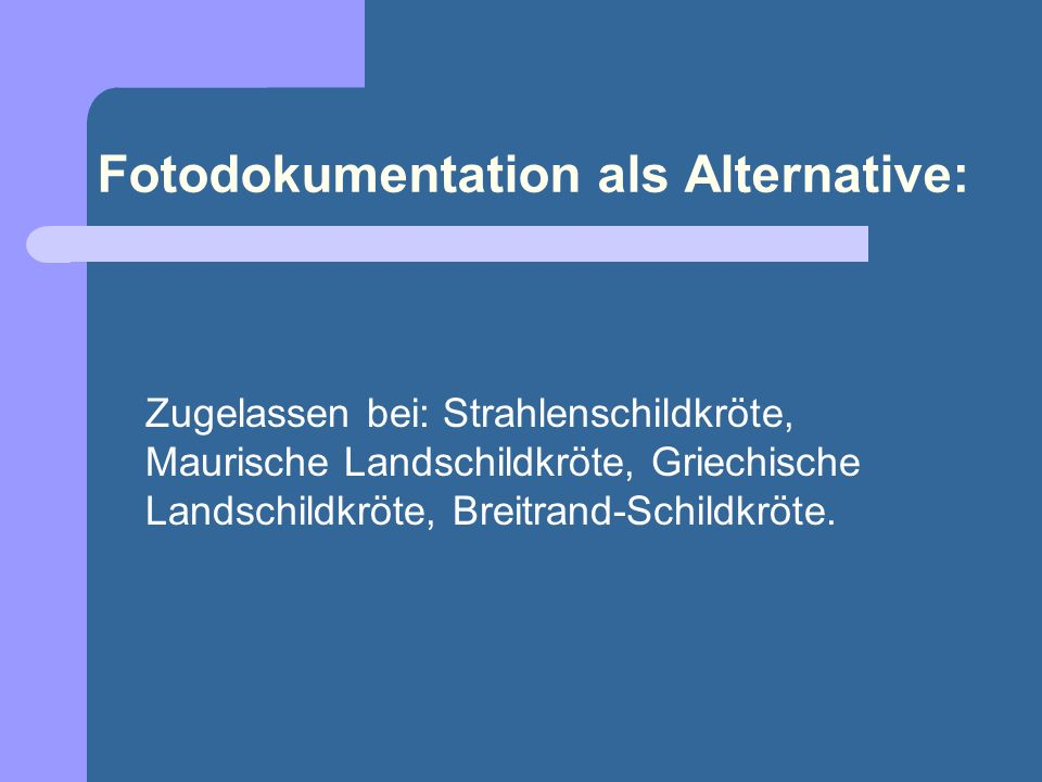 Fotodokumentation als Alternative: