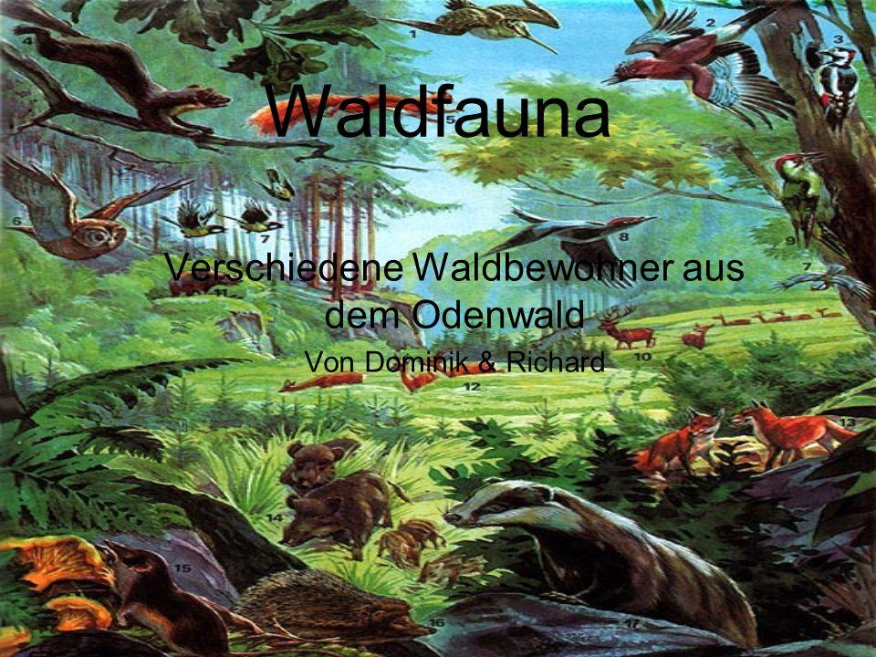 Verschiedene Waldbewohner aus dem Odenwald Von Dominik & Richard