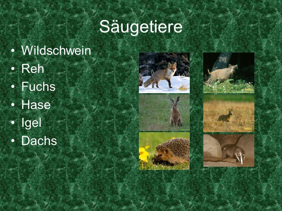 Säugetiere Wildschwein Reh Fuchs Hase Igel Dachs