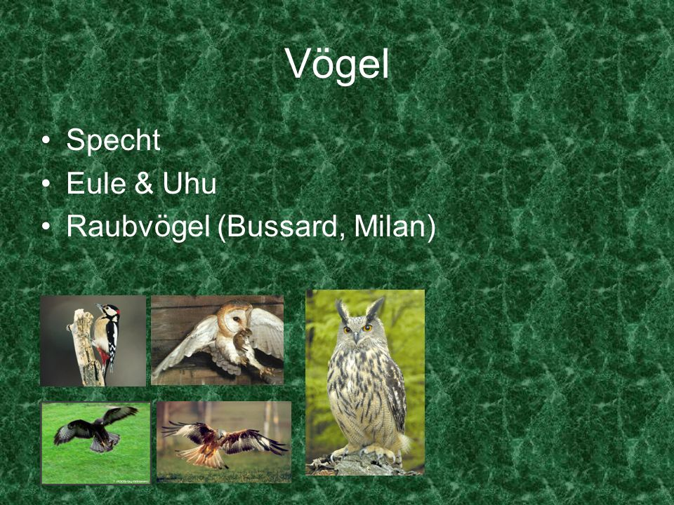Vögel Specht Eule & Uhu Raubvögel (Bussard, Milan)