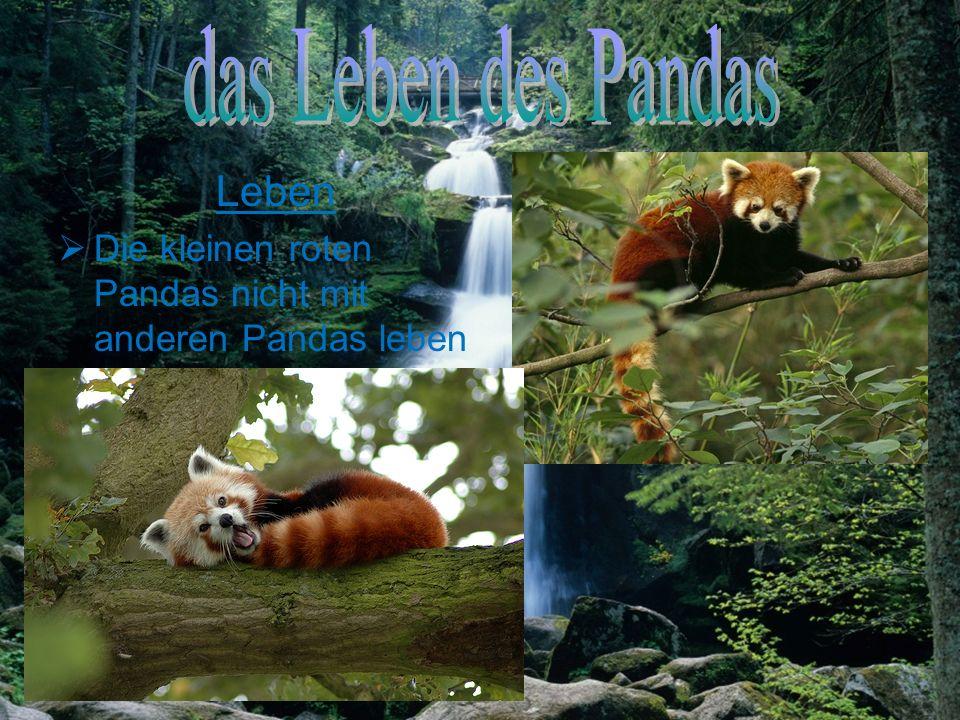 das Leben des Pandas Leben