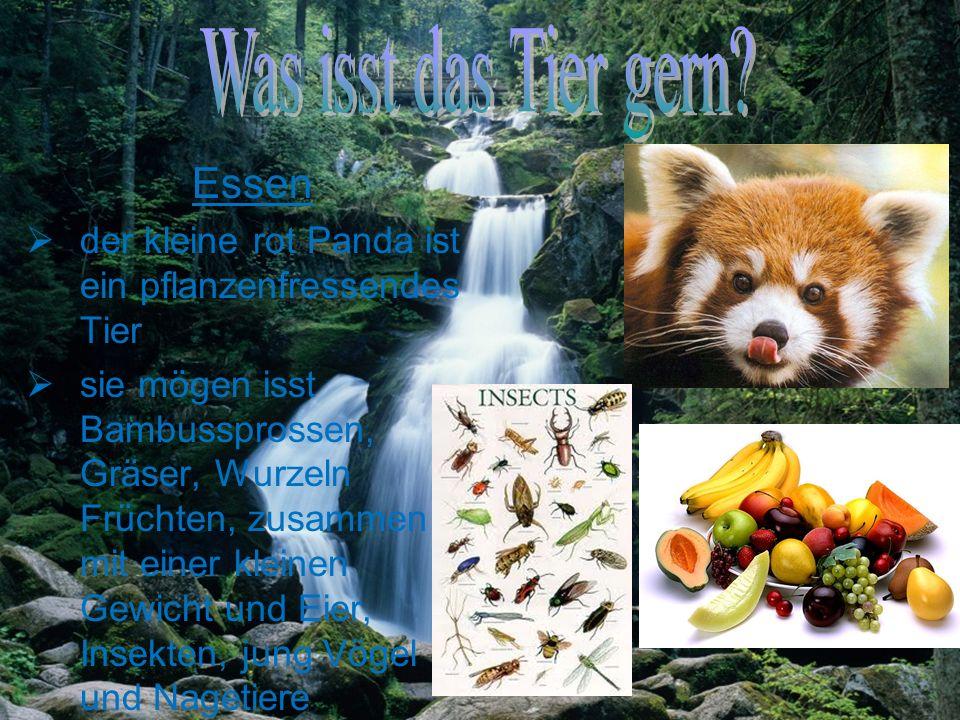 Was isst das Tier gern Essen