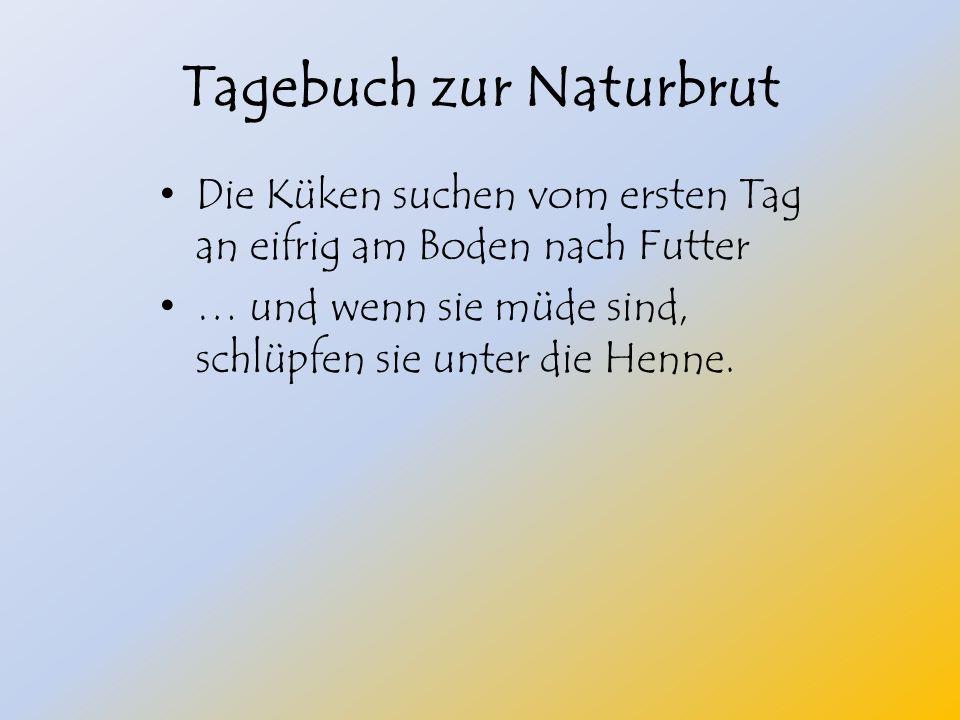 Tagebuch zur Naturbrut