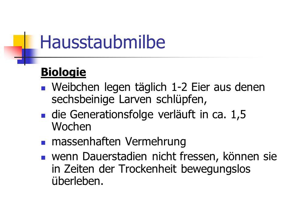 Hausstaubmilbe Biologie