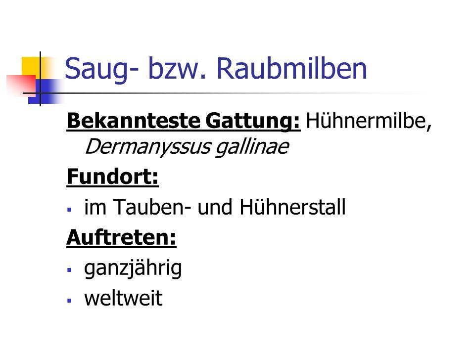 Saug- bzw. Raubmilben Bekannteste Gattung: Hühnermilbe, Dermanyssus gallinae. Fundort: im Tauben- und Hühnerstall.