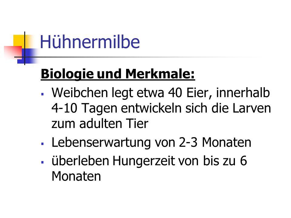 Hühnermilbe Biologie und Merkmale: