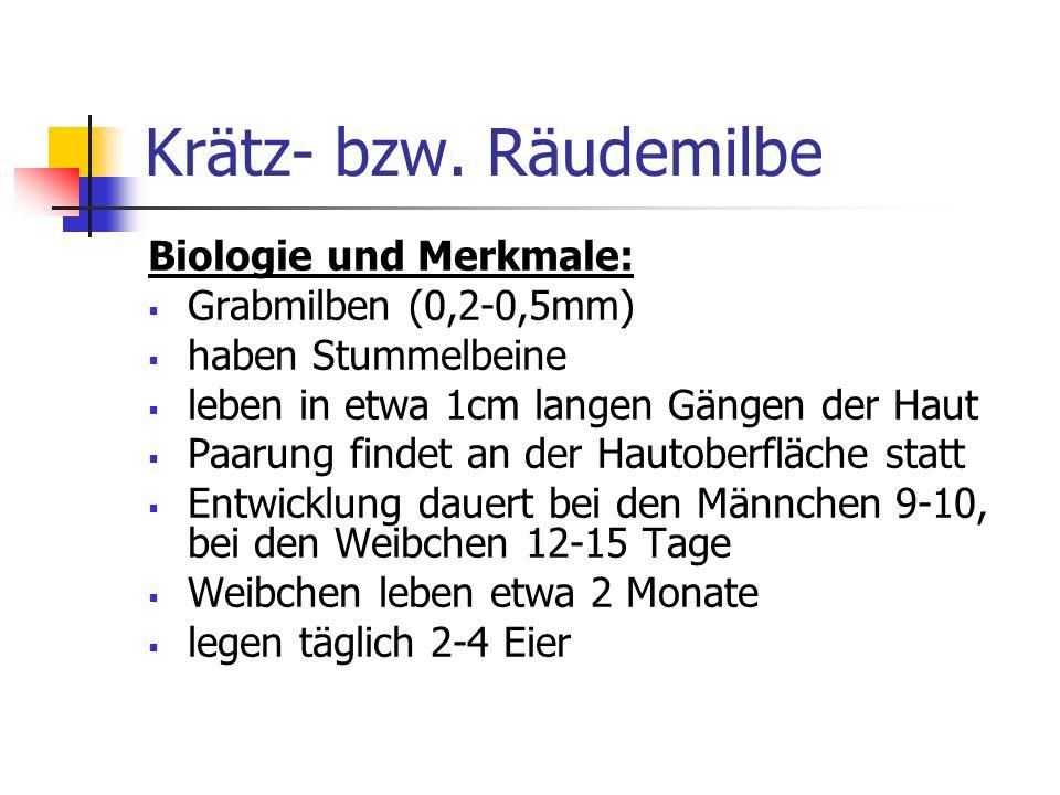Krätz- bzw. Räudemilbe Biologie und Merkmale: Grabmilben (0,2-0,5mm)
