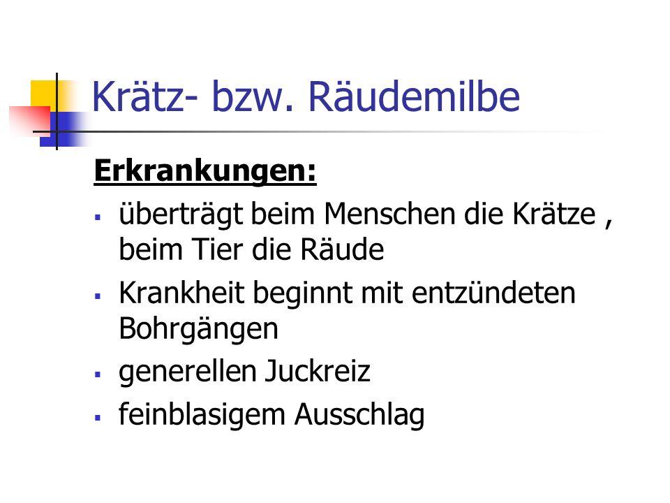 Krätz- bzw. Räudemilbe Erkrankungen: