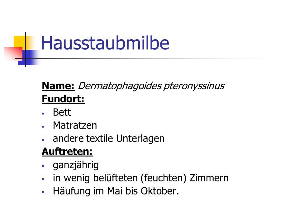 Hausstaubmilbe Name: Dermatophagoides pteronyssinus Fundort: Bett