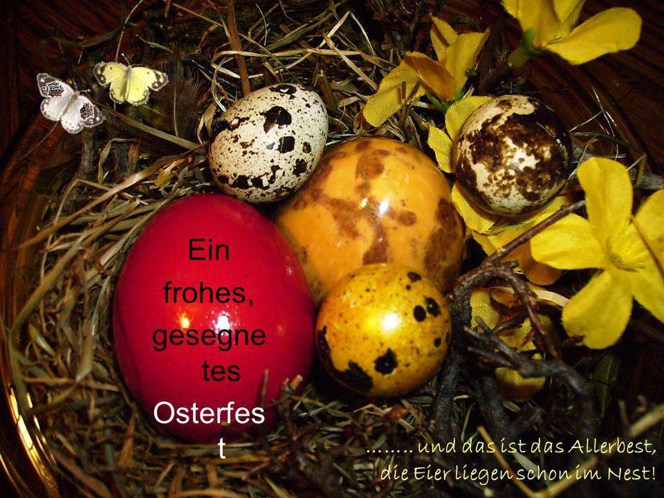 …….. und das ist das Allerbest, die Eier liegen schon im Nest!