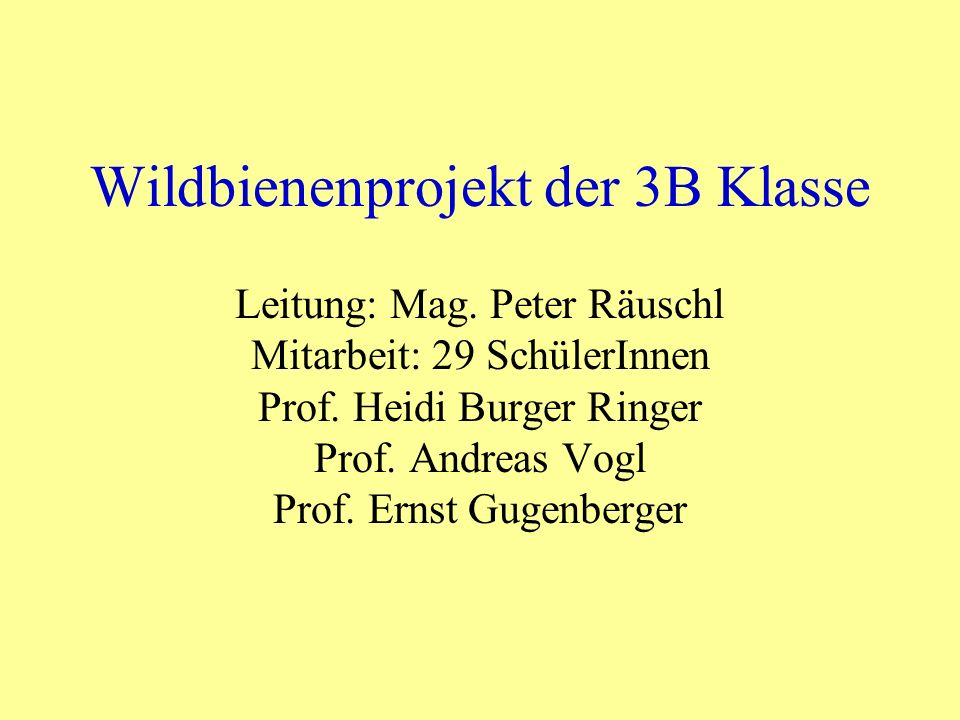 Wildbienenprojekt der 3B Klasse