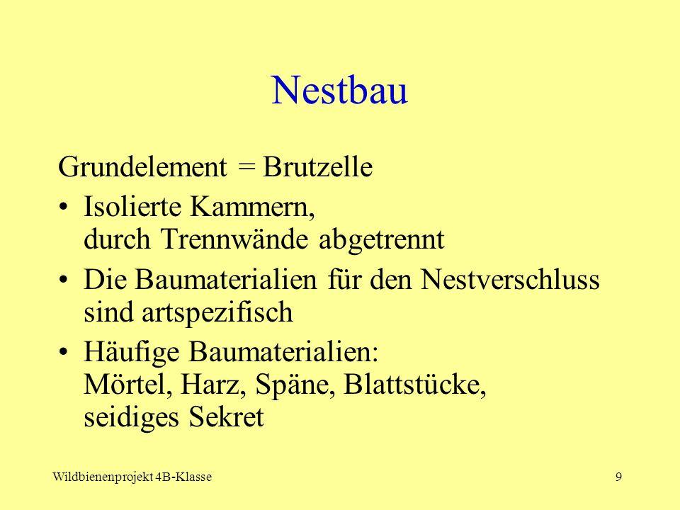 Nestbau Grundelement = Brutzelle
